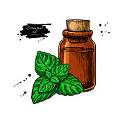 Mint essential oil bottle and peppermint leaves hand drawn vecto