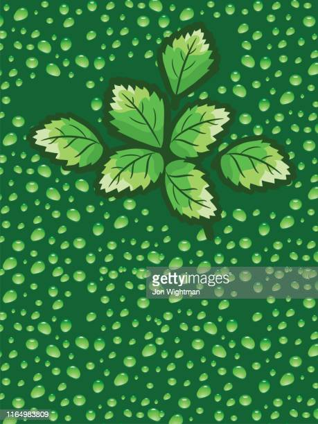 mint leaf droplet background - mint leaf culinary stock illustrations, clip art, cartoons, & icons