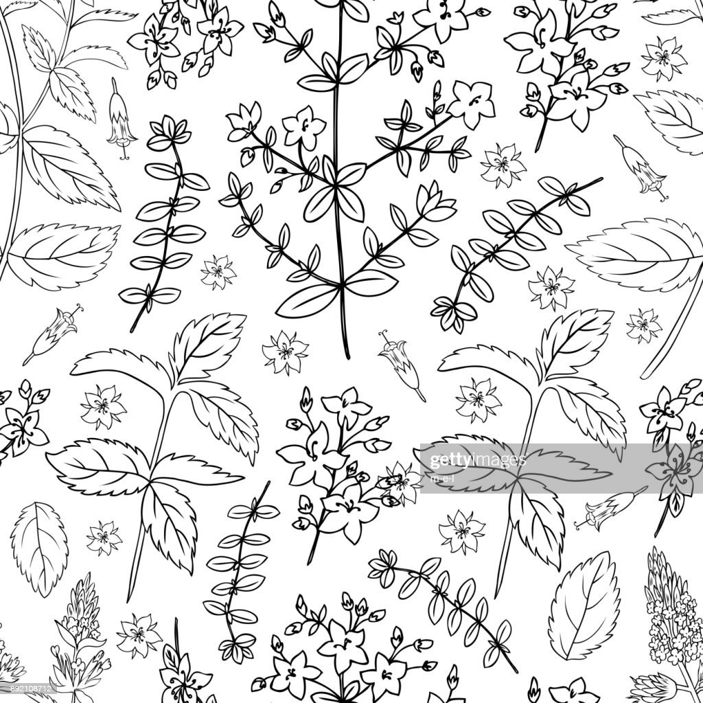 Mint leaf, peppermint bud, Hypericum, Tutsan herbs isolated on white background, Hand drawn vector seamless floral pattern, spicy kitchen texture, Cooking ingredient for design package tea