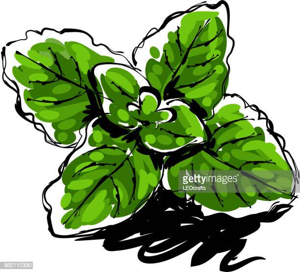 mint leaves drawing - mint leaf culinary stock illustrations, clip art, cartoons, & icons