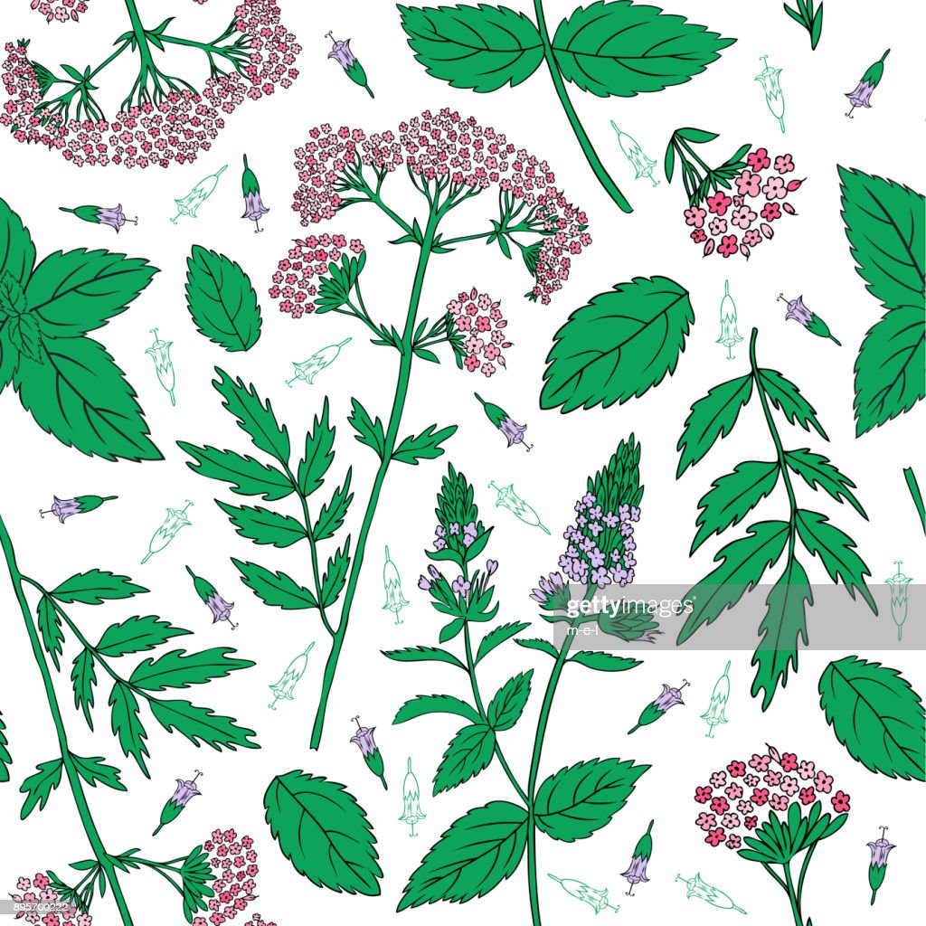 Mint leaves, peppermint buds, Valeriana officinalis isolated on white background, Hand drawn vector seamless floral pattern, spicy herb, kitchen texture, Cooking ingredient for design package tea