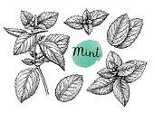 Mint sketch set