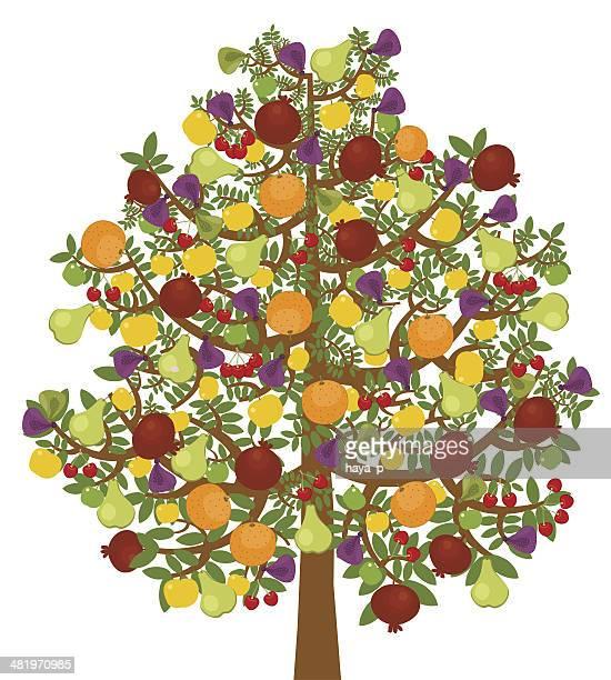 Miracke Arbre fruitier