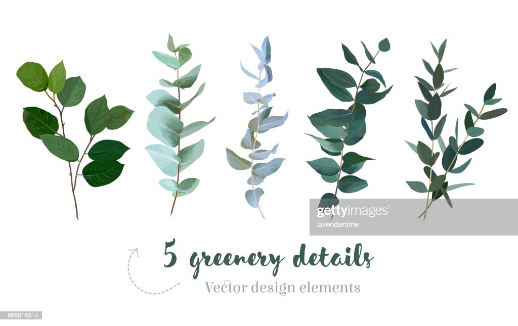 Mix of herbs and plants vector big collection