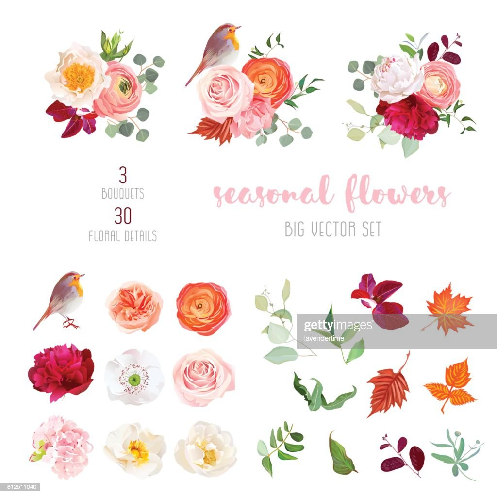 Mix of seasonal plants anf flowers big vector collection