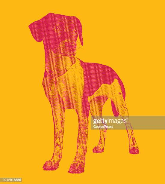 mixed breed hound dog in animal shelter hoping to be adopted - hunting dog stock illustrations