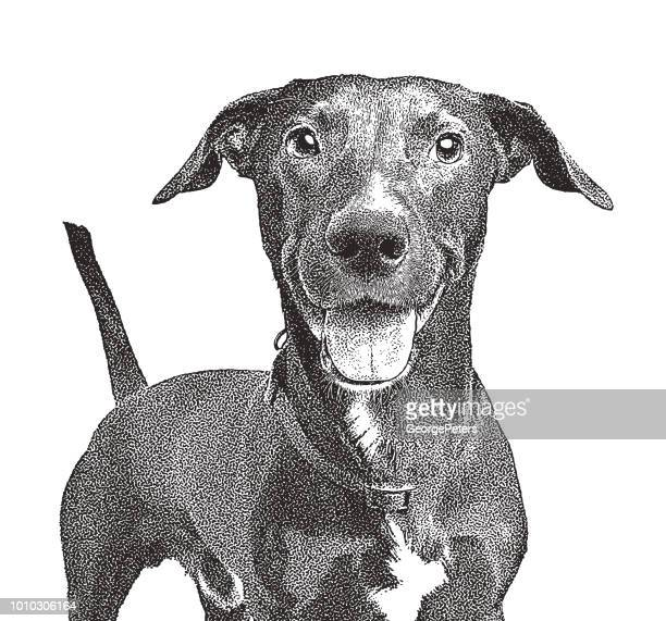 Mixed breed Labrador Retriever dog in animal shelter hoping to be adopted