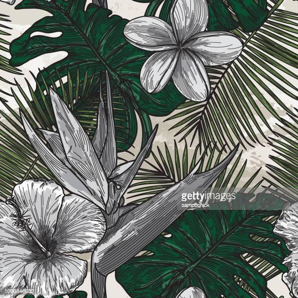 illustrations, cliparts, dessins animés et icônes de motif floral tropical moderne - exotisme