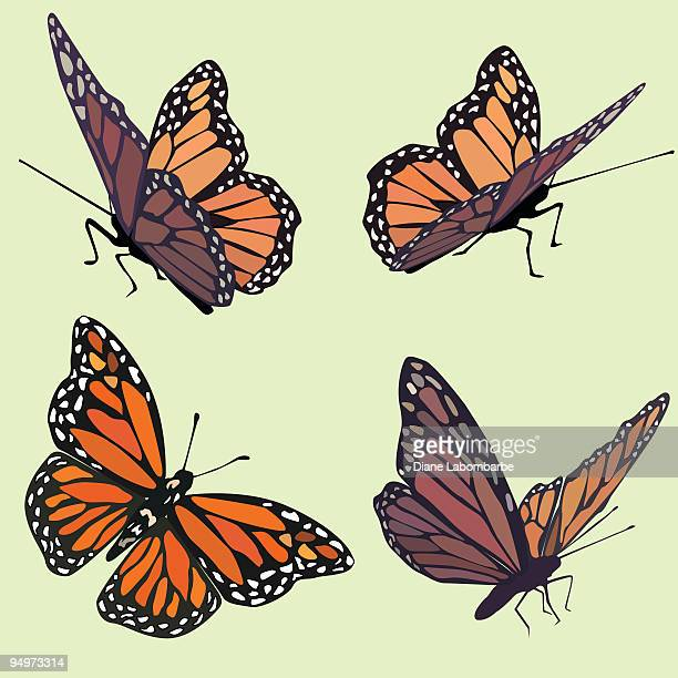 ilustraciones, imágenes clip art, dibujos animados e iconos de stock de monarca mariposas en cuatro diferentes poses en tonos pastel fondo verde - mariposa monarca