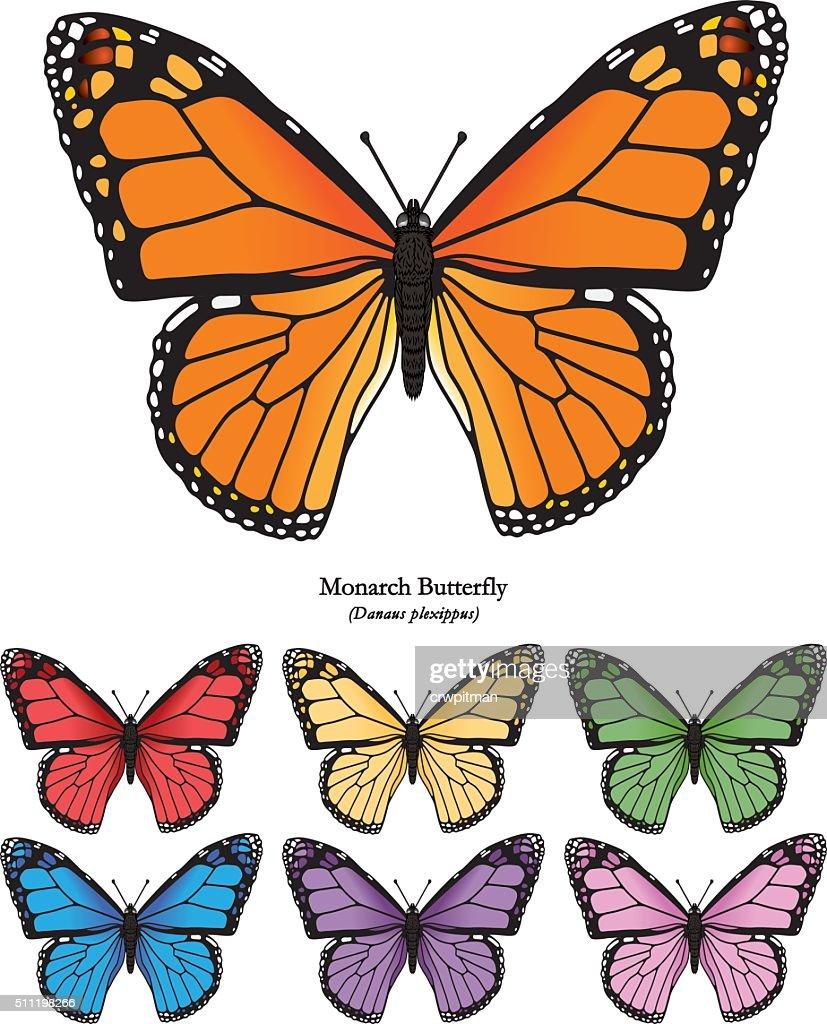 Monarch Butterfly Vector Illustration
