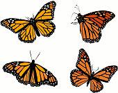 Monarch butterfly vector set