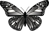 Monarch Butterfly...fly...fly...fly