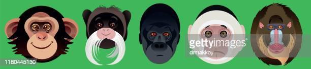 monkey faces - panama city stock illustrations, clip art, cartoons, & icons