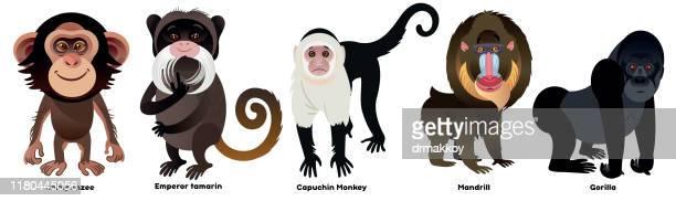 monkeys - mandrill stock illustrations, clip art, cartoons, & icons