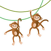 Monkeys vector illustration