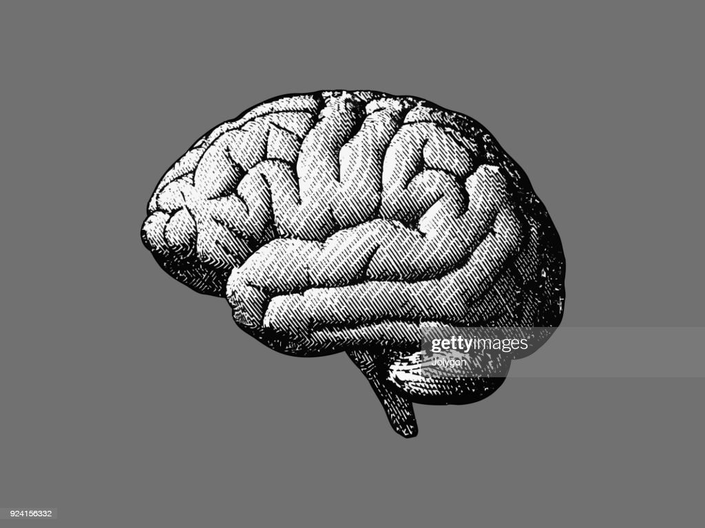 Monochrome brain drawing on gray BG
