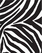 Monochrome close up of flattened Zebra pattern