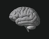 Monochrome engraving brain side view illustration