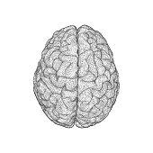 Monochrome triangular brain illustration on white BG