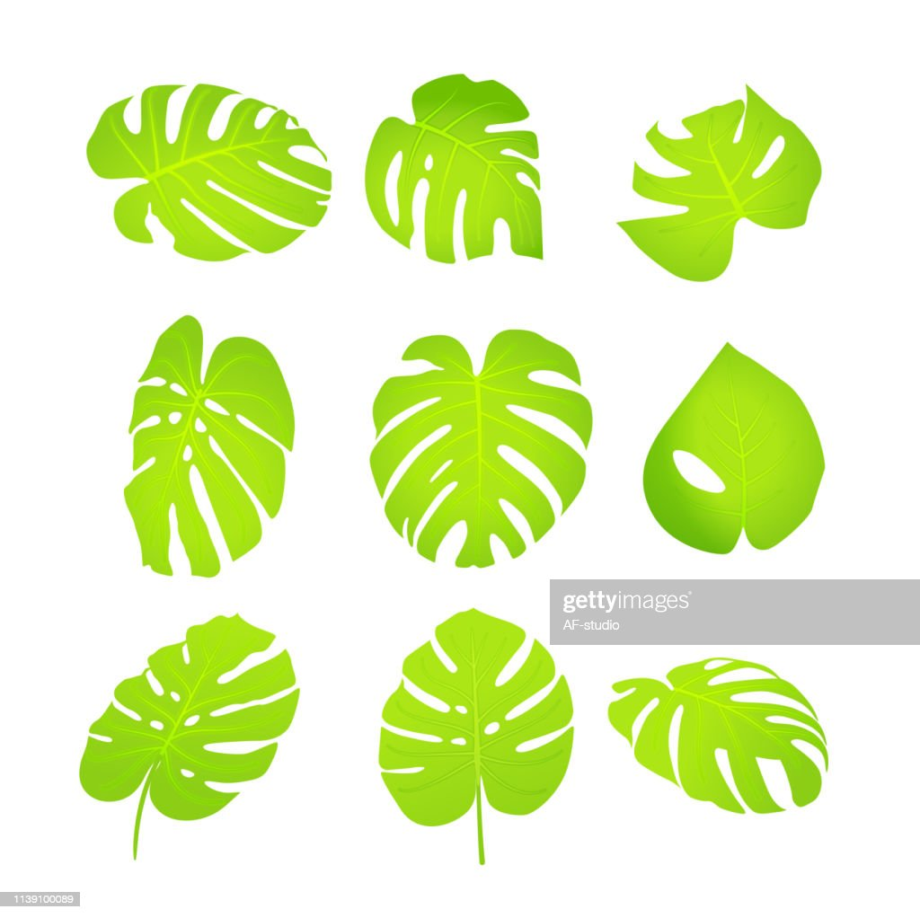 Monstera Leafs - Collection : stock vector