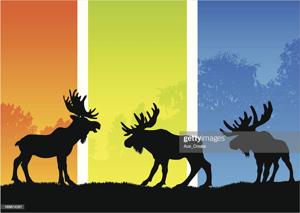 Moose silhouettes in a seasonal landscape