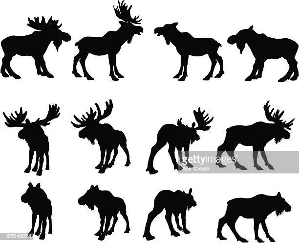 moose silhouettes (bull and cow) - antler stock illustrations