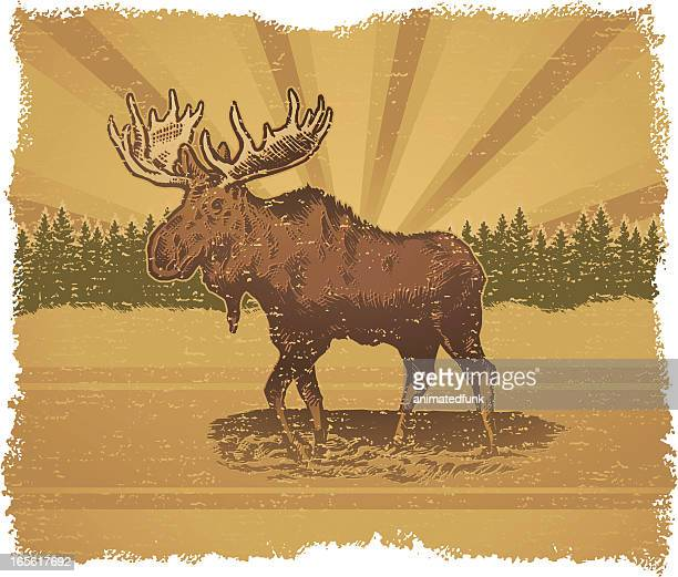 moose standing outside with trees in background - elk stock illustrations