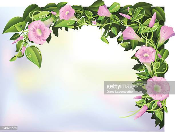 morning glories illustratiopink n - natural arch stock illustrations, clip art, cartoons, & icons