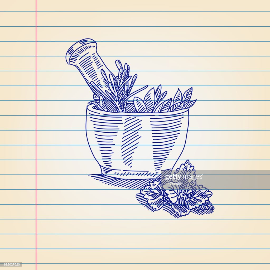 Mortar And Pestle With Herbs Drawing On Ruled Paper Vector Art ... for Mortar And Pestle Drawing  300lyp