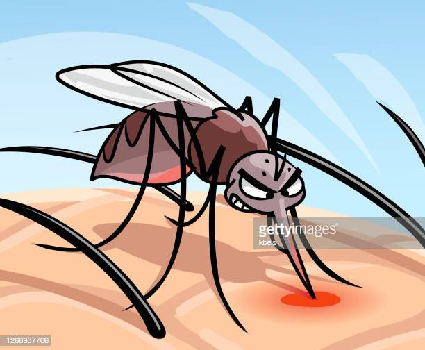 mosquito sucking blood - insect bites images stock illustrations
