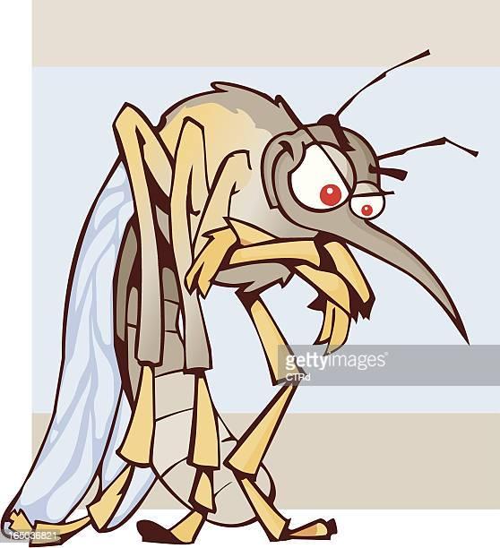 ilustraciones, imágenes clip art, dibujos animados e iconos de stock de mosquito - mosquito