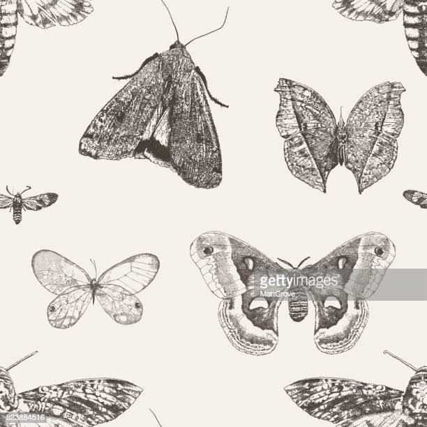 Moth Light Repeat