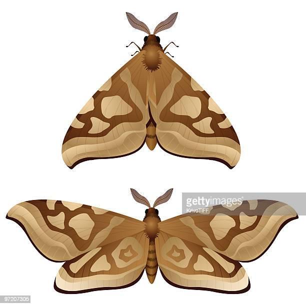illustrations, cliparts, dessins animés et icônes de papillon de nuit - papillon de nuit