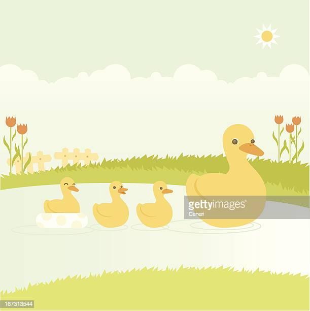 bildbanksillustrationer, clip art samt tecknat material och ikoner med mother duck swimming with her ducklings - duck