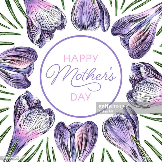 mother's day border of crocus flowers watercolor and ink vector illustration - mothers day text art stock illustrations