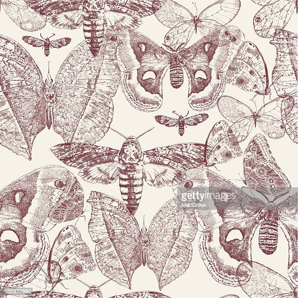 Moths Repeat