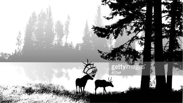 mountain lake wildlife - elk stock illustrations