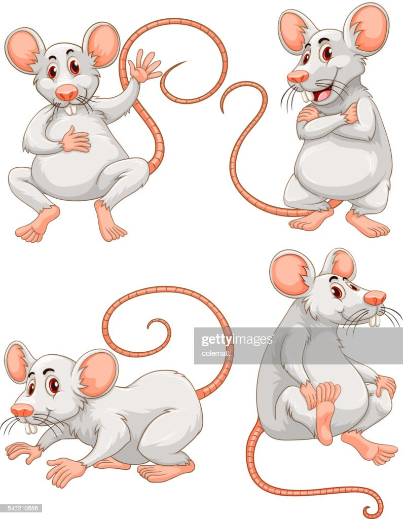 Mouse in four different actions