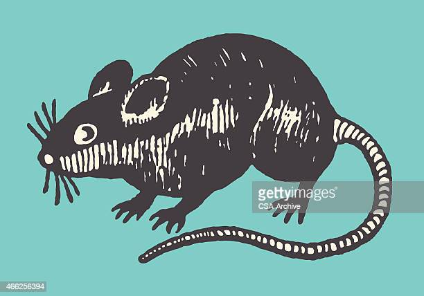 mouse - one animal stock illustrations
