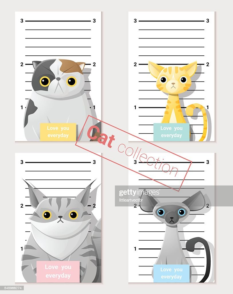 Mugshot of  cute cats holding a banner 2