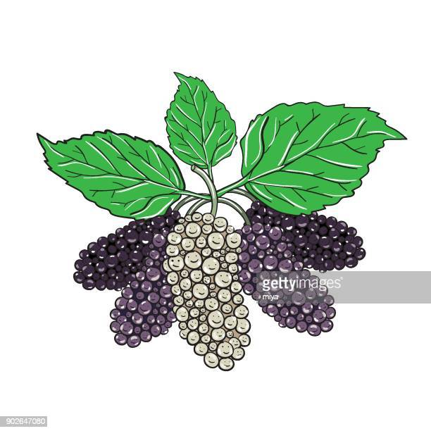 mulberry - vector illustration - antioxidant stock illustrations, clip art, cartoons, & icons