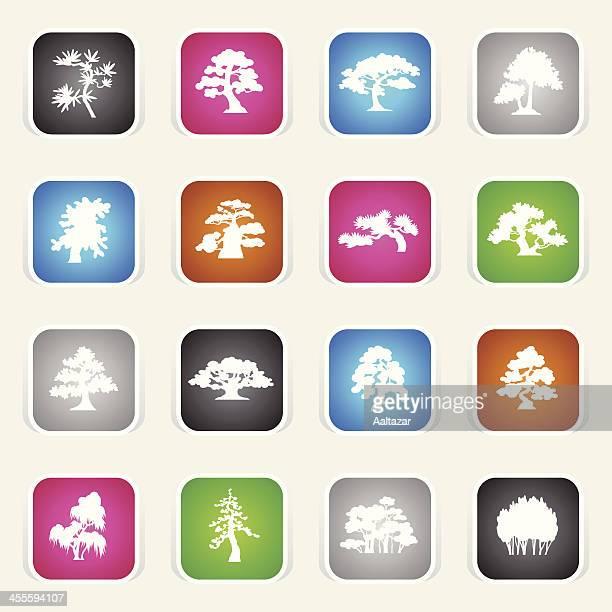 multicolor icons - trees species - cedar tree stock illustrations, clip art, cartoons, & icons