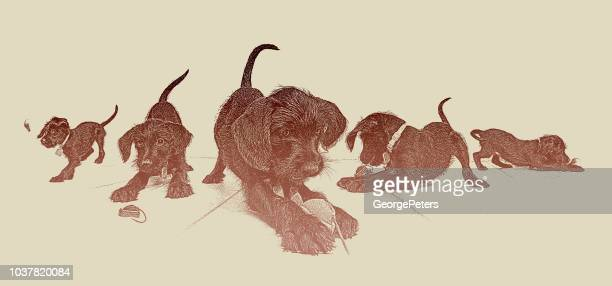 multiple exposure of a cute puppy playing with dog's toy - dog toys stock illustrations