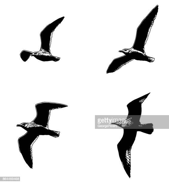 Multiple exposure Set of seagulls in flight