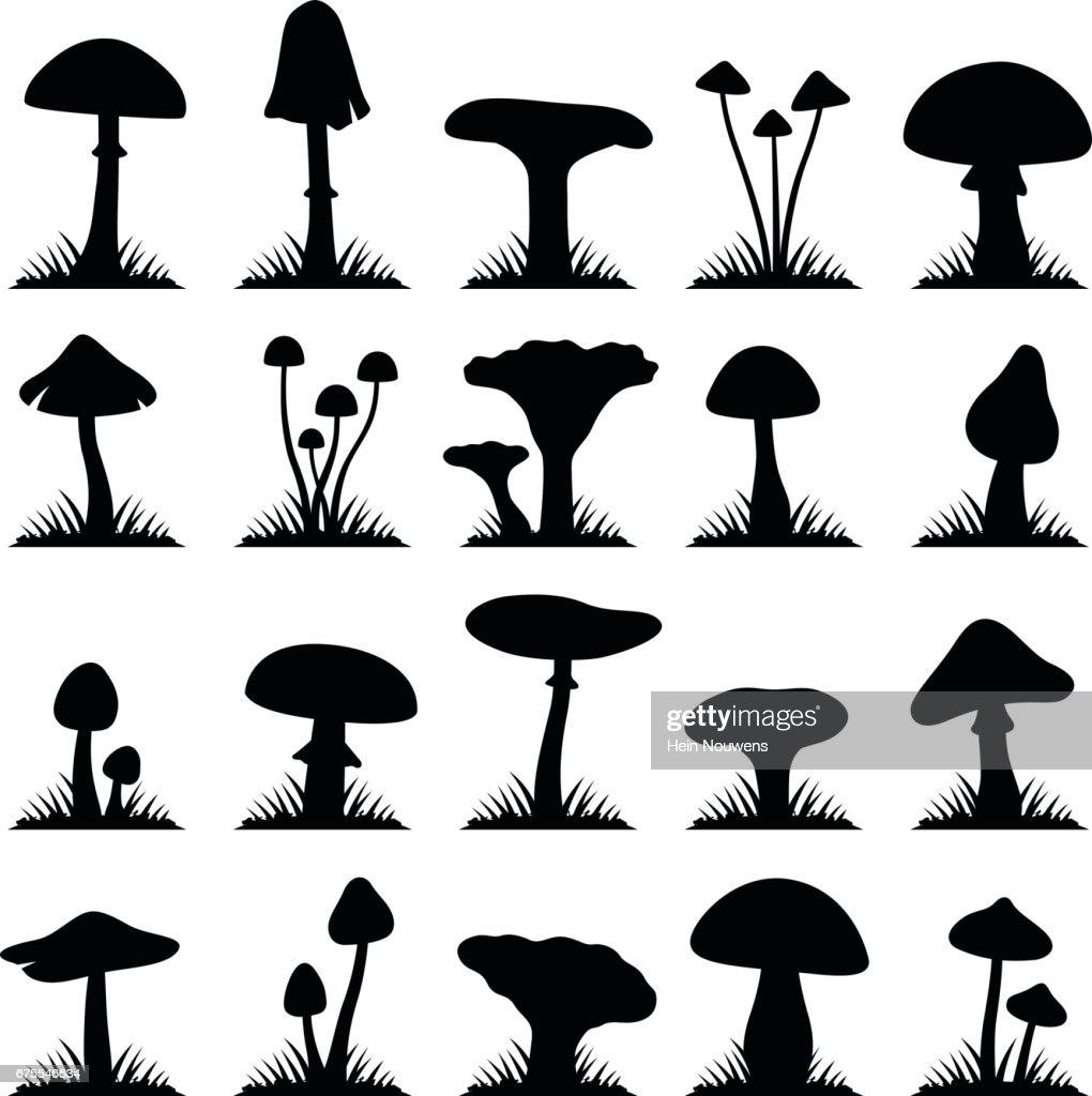 Mushroom and toadstool