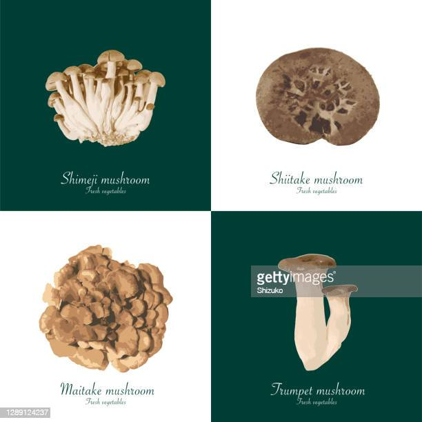 mushroom from background of white and dark green - king trumpet mushroom stock illustrations