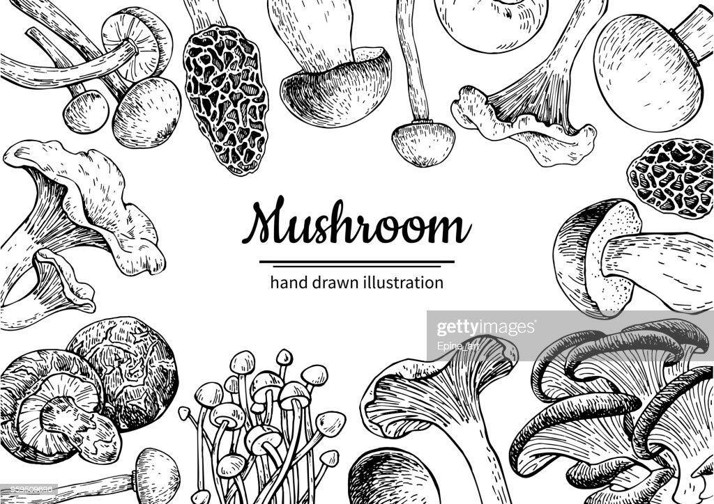 Mushroom hand drawn vector frame. Isolated Sketch organic food d