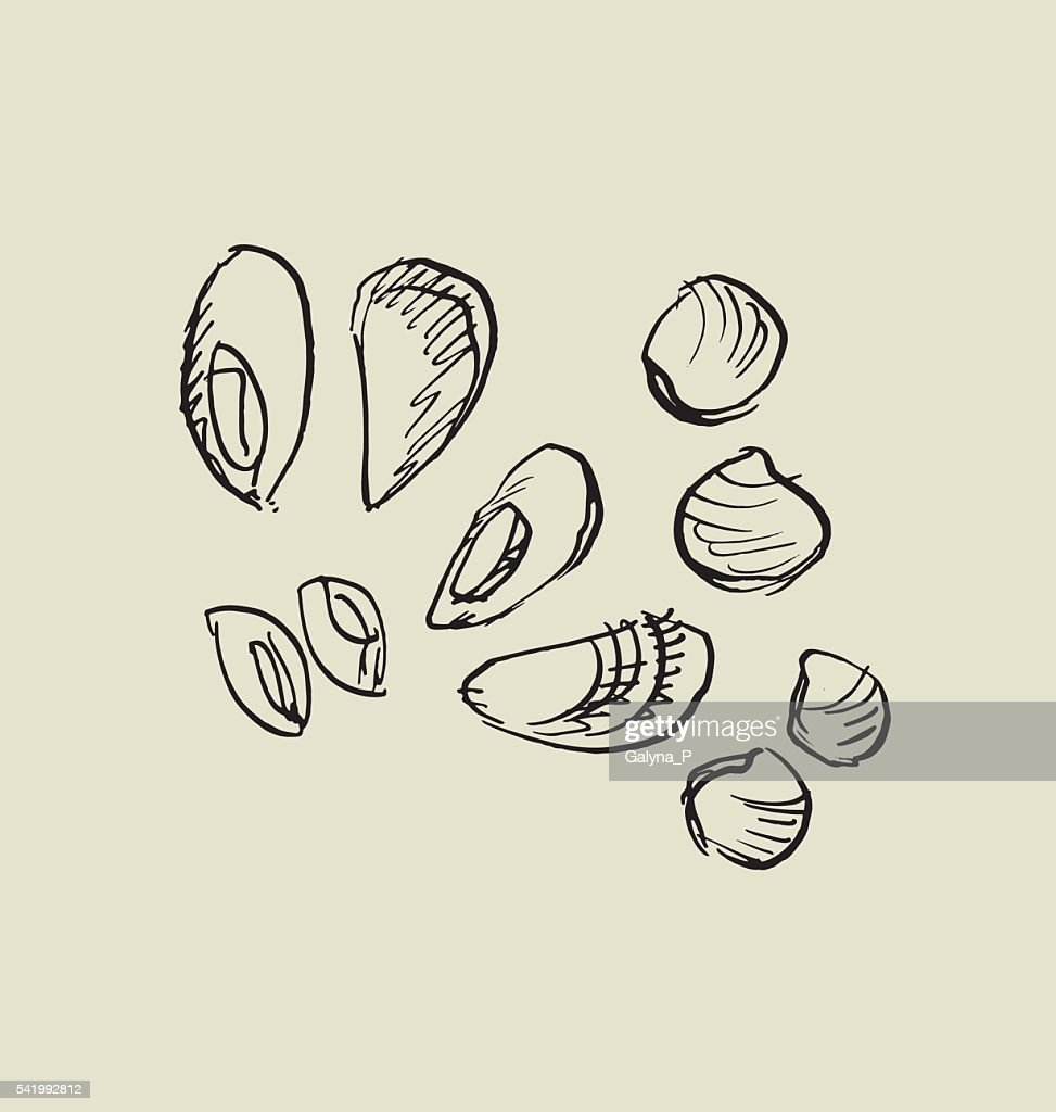 mussel, and shell icon.