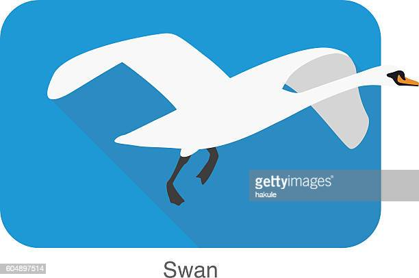 mute swan, cartoon vector illustration
