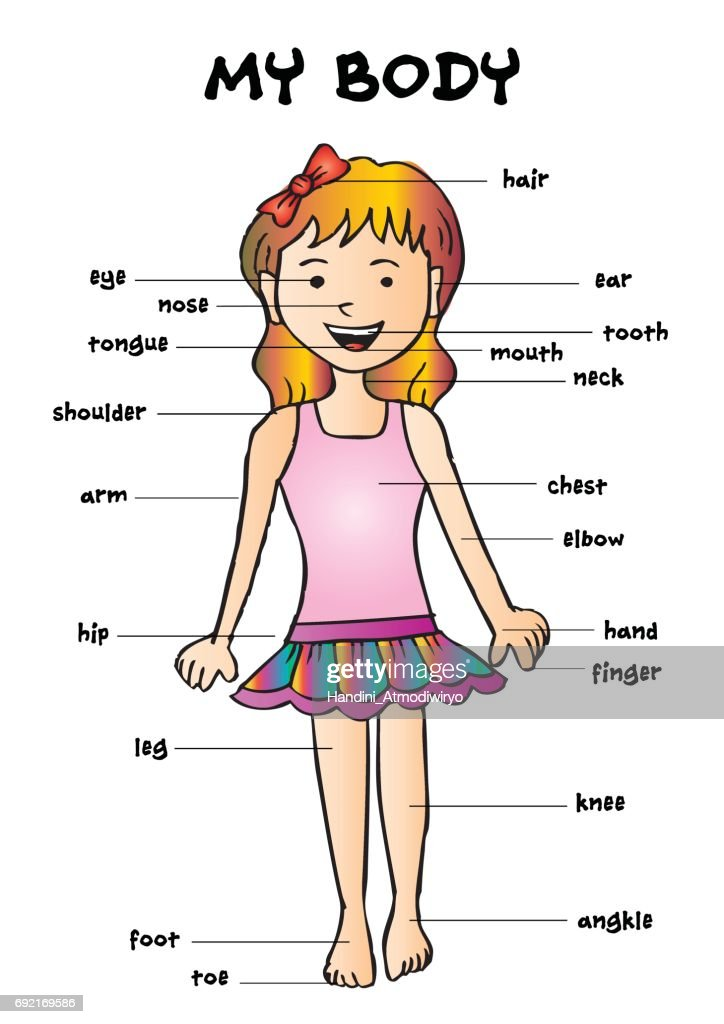 My body', educational info graphic chart for kids showing parts of human body of a cute cartoon girl.
